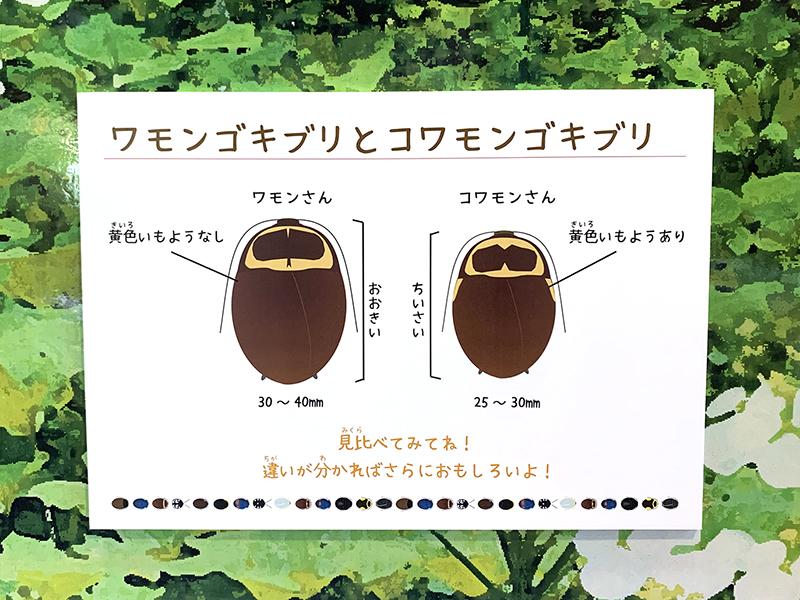 ワモンゴキブリとコワモンゴキブリの違いを紹介するパネル展示