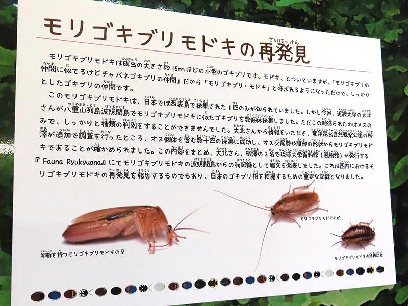 モリゴキブリモドキのパネル展示