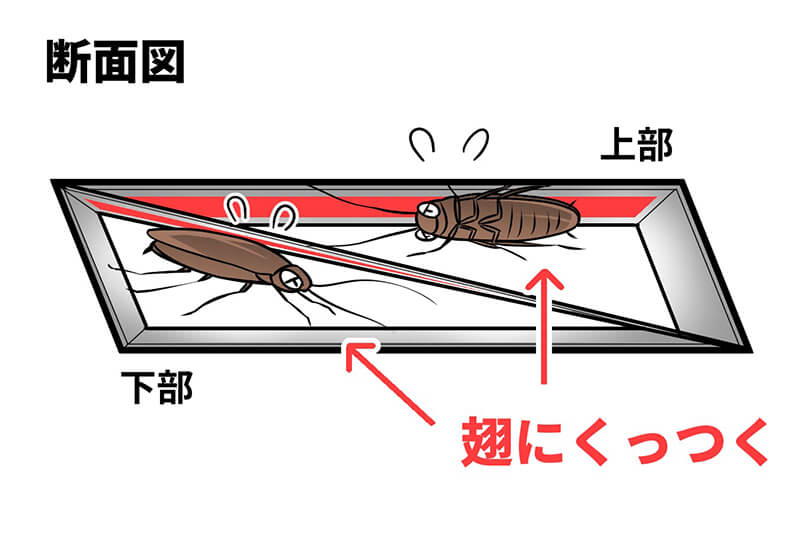 ゴキブリを捕獲した時の「ゴキファイタープロ 激取れ」断面図