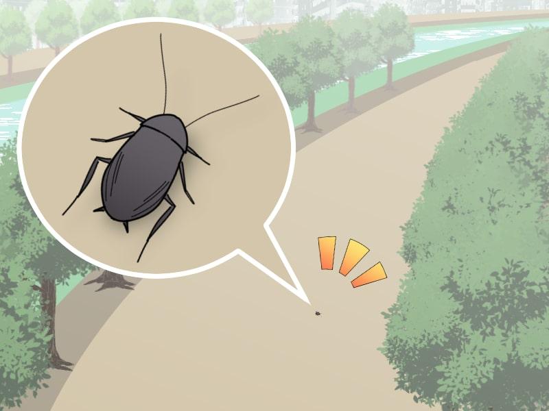 森林の遊歩道にいるゴキブリ