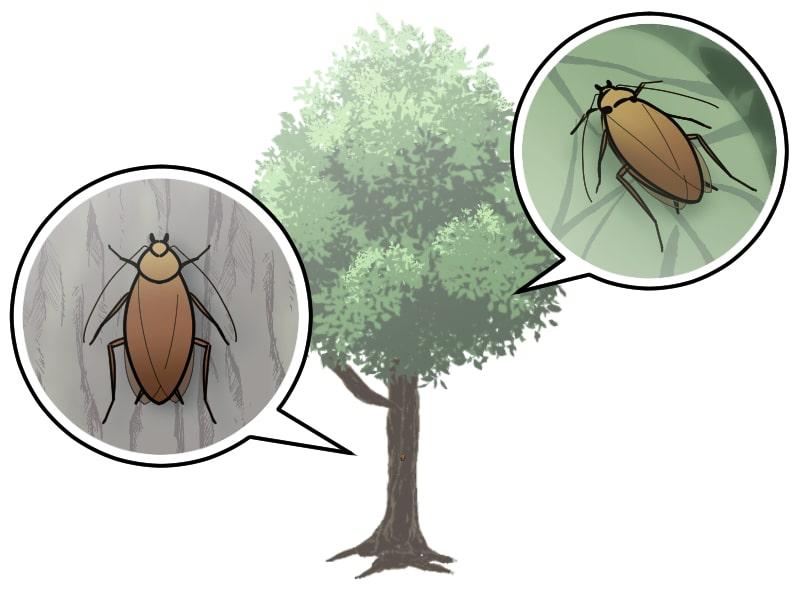 葉っぱの上や木の幹に潜むゴキブリ