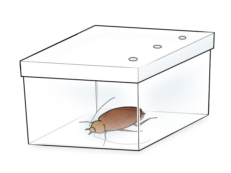 蓋に穴の空いたタッパーに入ったゴキブリ
