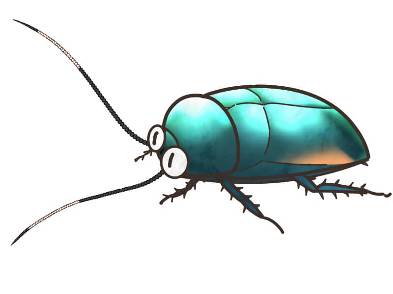 オオルリゴキブリ
