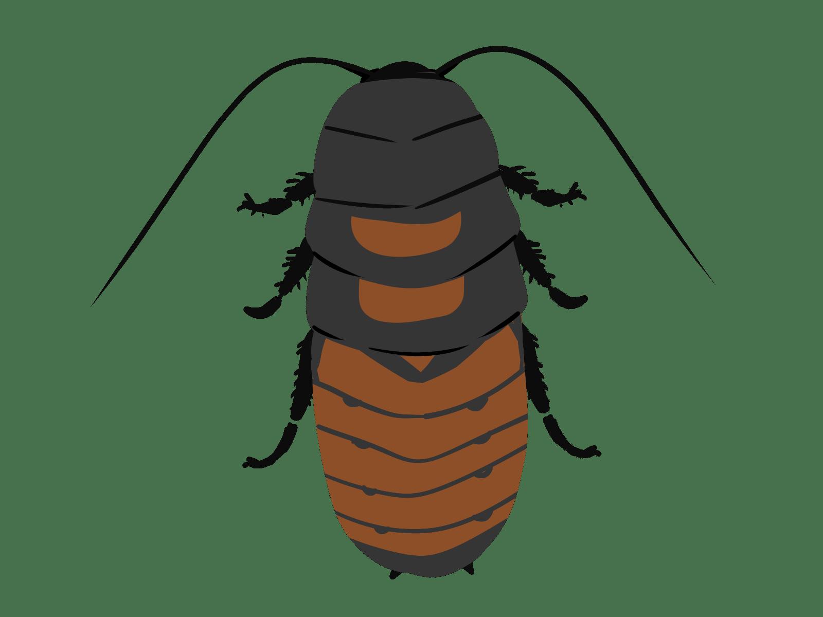 マダガスカルゴキブリのイラスト