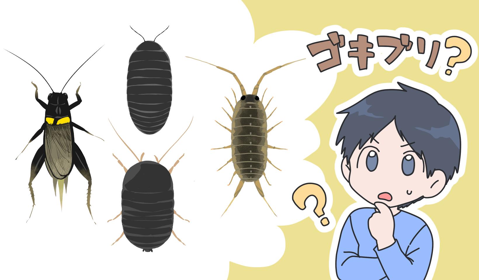 ゴキブリに似ている虫について考えている男性