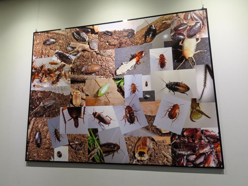 アース製薬の有吉立さんが撮影したゴキブリの写真の展示
