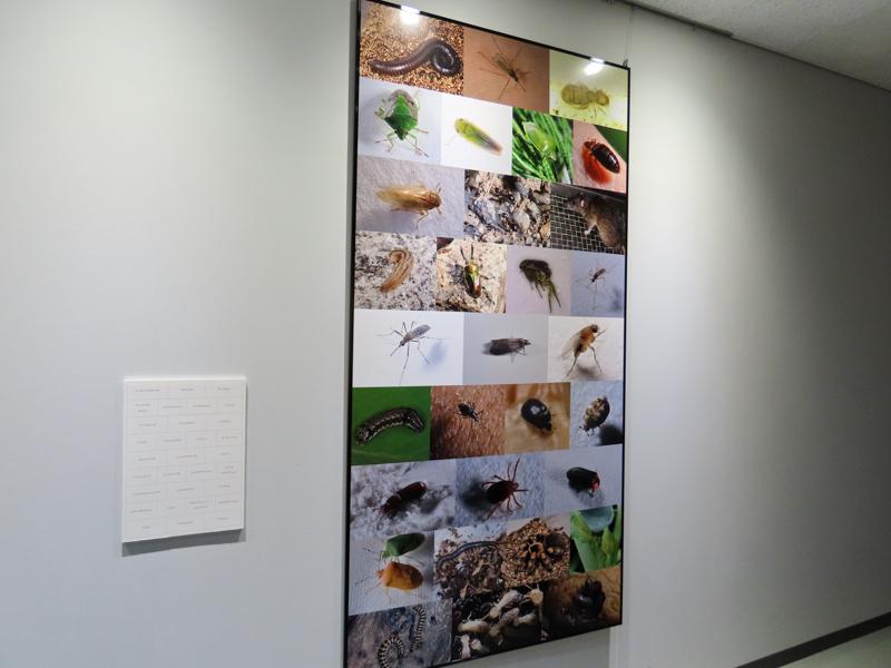 アース製薬の有吉立さんが撮影した昆虫の写真の展示