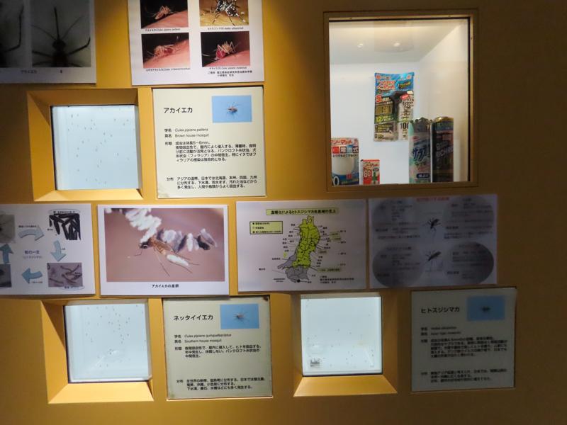 蚊の生体展示の様子