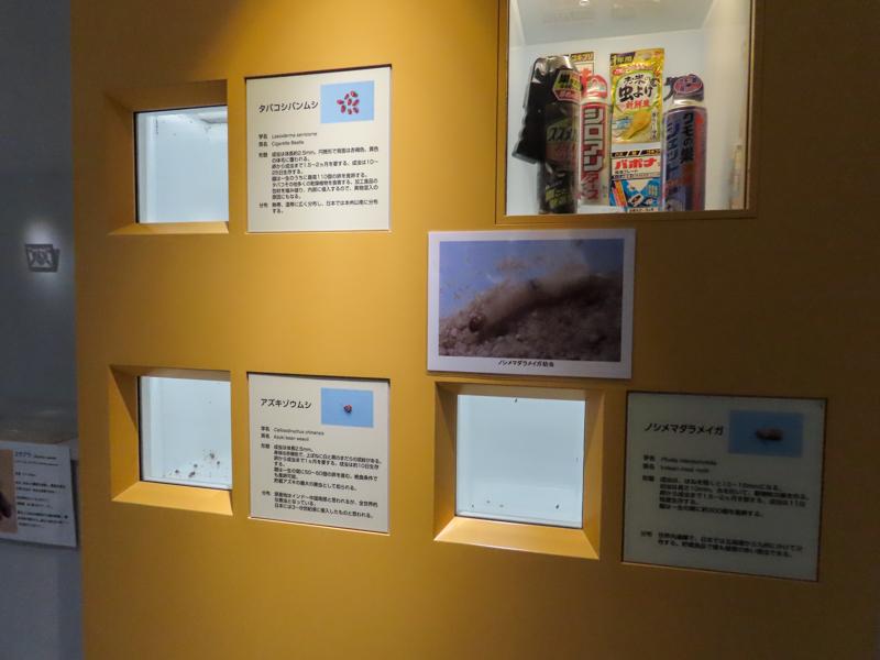 ノシメマダラメイガやタバコシバンムシの生体展示の様子