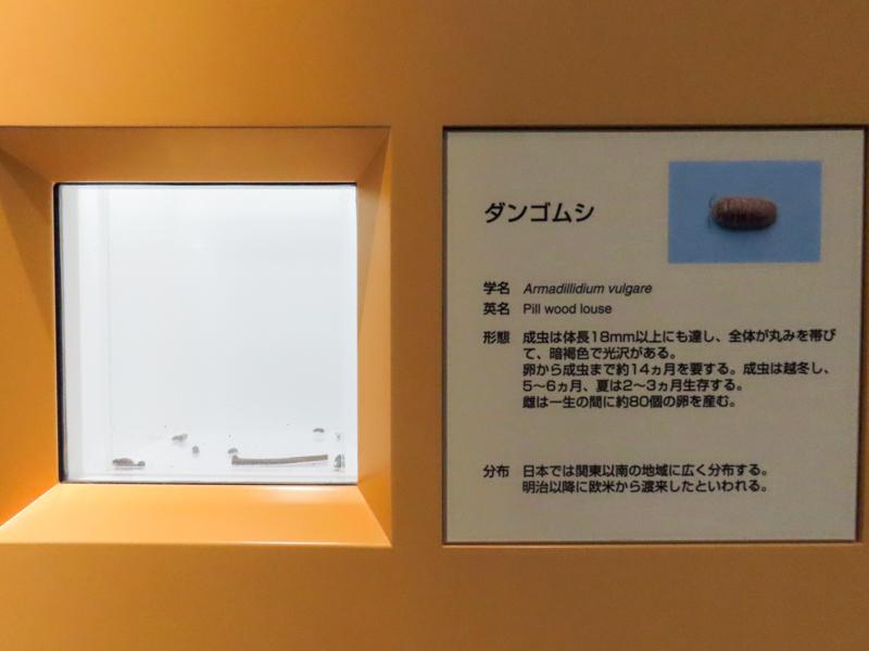 ダンゴムシの生体展示の様子