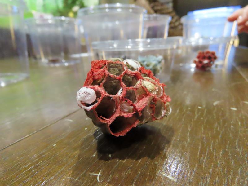 スズメバチが折り紙で作った巣