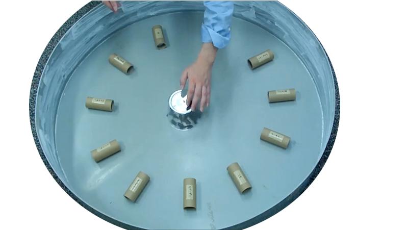 香りを付けた脱脂綿入りの筒を並べた実験装置にクロゴキブリを放つ様子