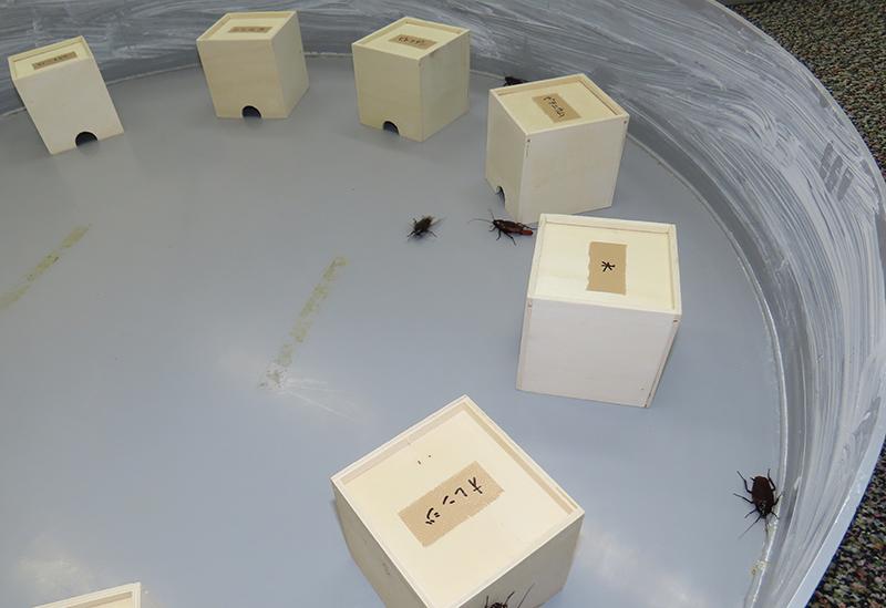 小箱を並べた桶型の実験装置