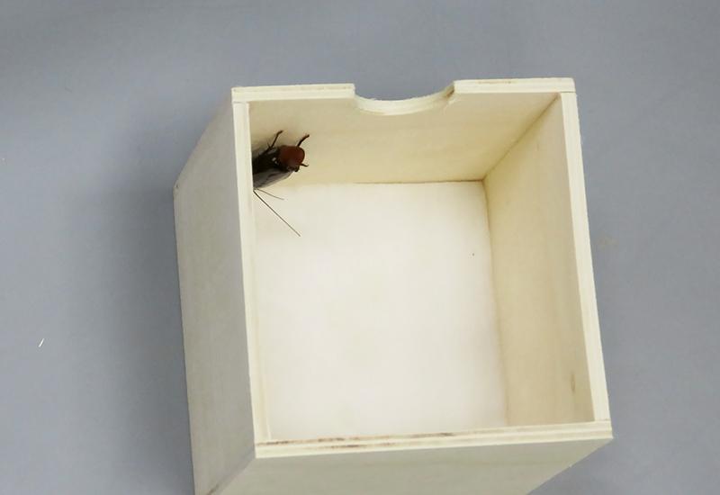 クロゴキブリがゼラニウムの匂いを付けた脱脂綿入りの小箱に入っている様子