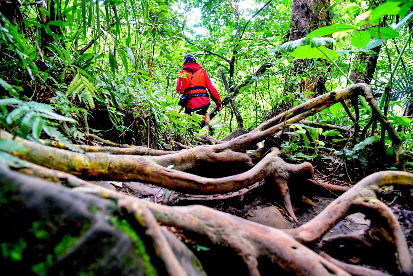 森の中を歩く人の後ろ姿