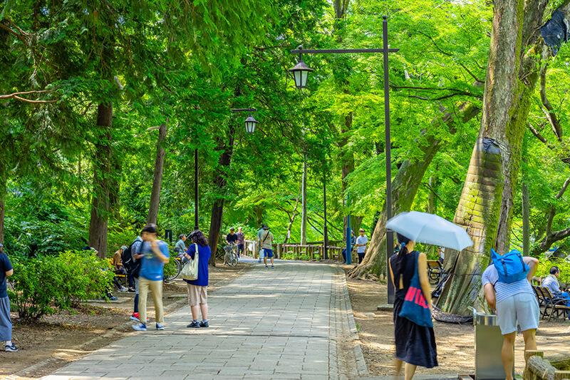 広葉樹のある公園風景