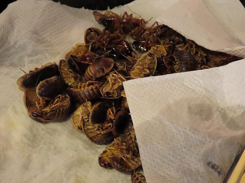 下茹でされた大量のアルゼンチンモリゴキブリ