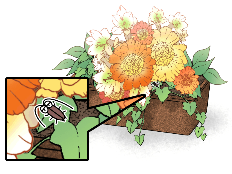 観葉植物に潜むゴキブリ