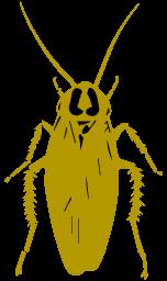 チャバネゴキブリの成虫