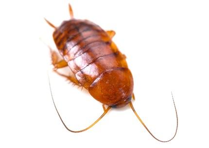 ゴキブリ どこから 小さい どこからゴキ○リが・・・