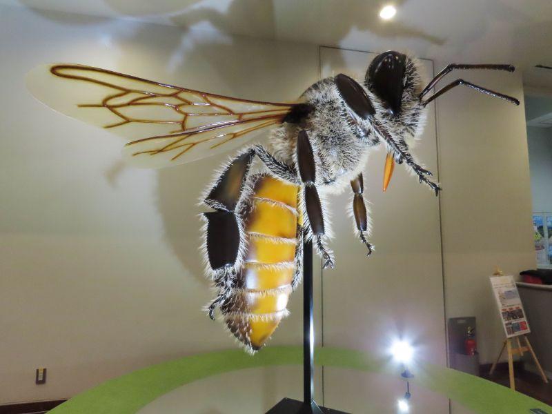 特別展「昆虫」の雑観