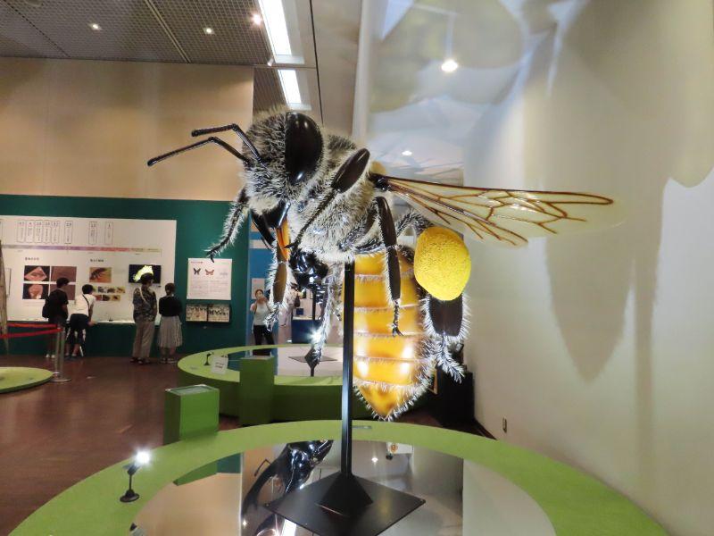 花粉と蜜を丸めたものを肢に付けたハチの巨大模型