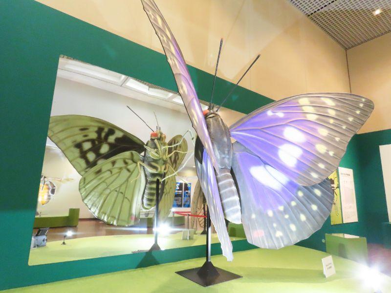 展示されたオオムラサキの巨大模型