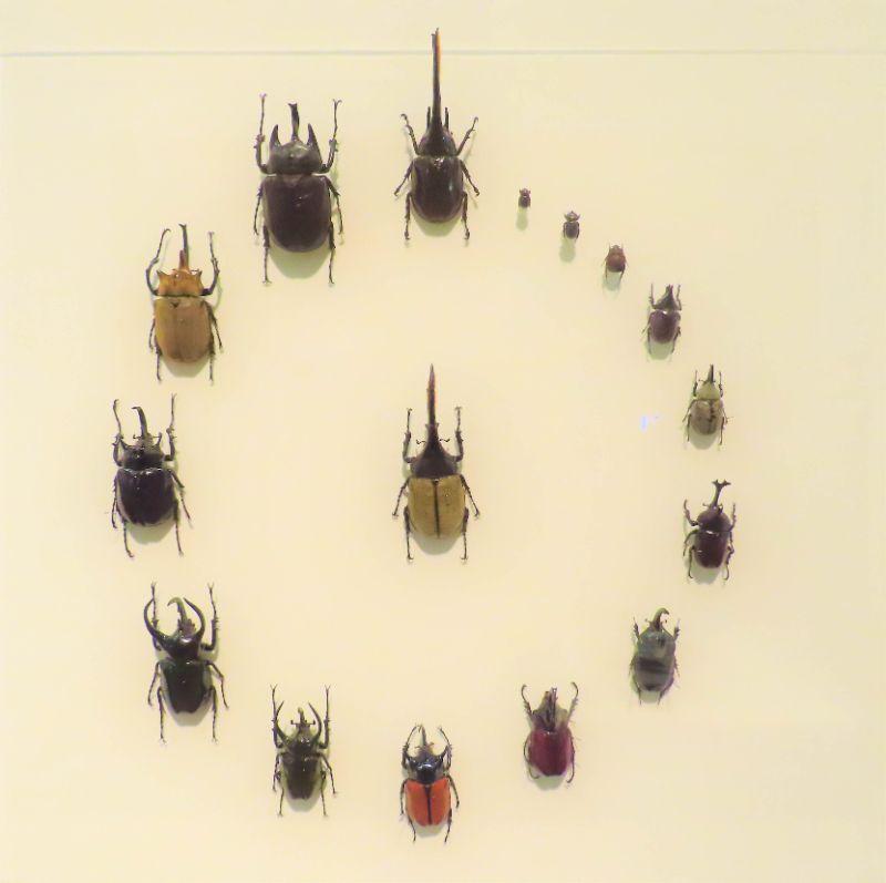 カブトムシの標本