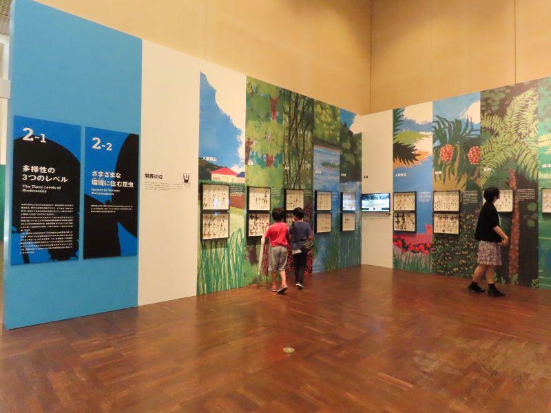 関西近辺、沖縄、アマゾンの3つの地域に生息している昆虫の標本を展示しているコーナー