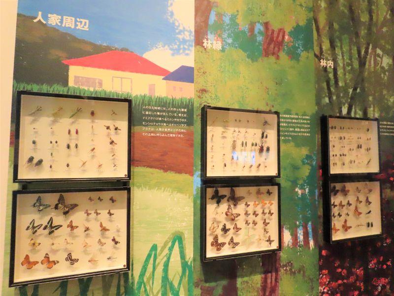 関西に生息している昆虫の標本