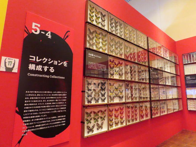大阪市立自然史博物館が、宝塚の博物館から譲り受けた昆虫の標本