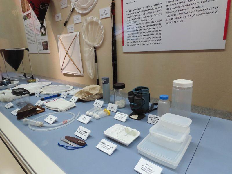 展示された昆虫採集の道具
