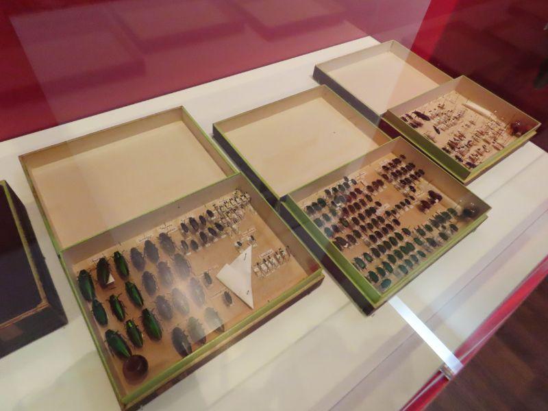 100年前に制作された昆虫標本
