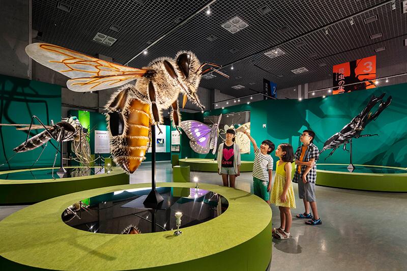 特別展「昆虫」の展示風景※東京展の様子