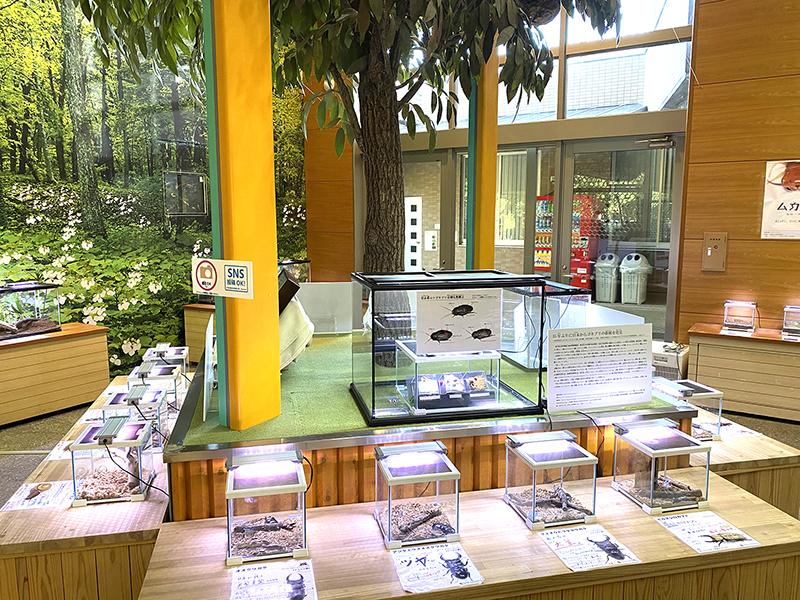 ウスオビルリゴキブリ、アカボシルリゴキブリ、ルリゴキブリの展示風景